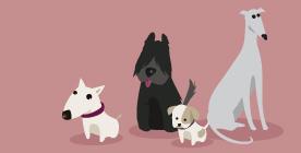 Doggy Zen Educateur canin comportementaliste